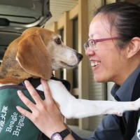 Taiwan customs canine 'Mini' sniffs out contraband meat on her 1st shift in Kinmen