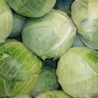 農委會推高麗菜保障制度 每公斤至少6元收購