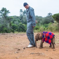 Yao Ming's Dedication to Wildlife is a Slam Dunk