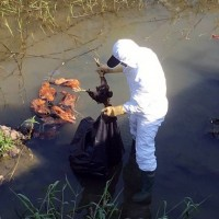 雲林撲殺逾萬隻H5禽流感黃金雞 嘉義民雄52隻死雞遭棄置