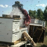 農委會:蜂蜜產品溯源管理 借助科技讓養蜂資訊更透明