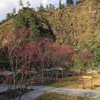 Forestry Bureau: Fairyland-like Basianshan is a nice place to visit during LNY