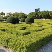 春節好時光 至新生公園賞飛機、訪迷宮花園