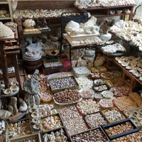 澎湖「貝殼達人」王旭禧 收藏多達200萬顆堪比博物館