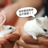 Taipei man indicted for killing hamster during spat with girlfriend