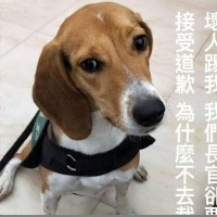 Taiwan immigration official apologizes after kicking airport sniffer dog