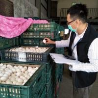 芬普尼蛋7480台斤流入市面 農委會:該農場複驗已合格