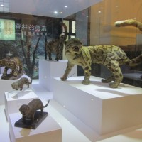 Sightings of thought-to-be-extinct Taiwanese leopard need verifying, say officials