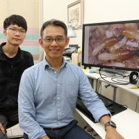 Taiwanese experts use indigenous term to name new termite species