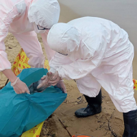 Dead piglet found on New Taipei beach amid fears of African Swine Fever