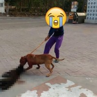 Taiwanese outraged after pit bull savagely mauls dog to death