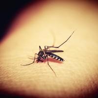 登革熱境外群聚感染 疾管署籲赴新南向國家要落實防蚊措施