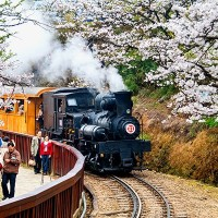 Steam train rides available during Taiwan's Alishan cherry blossom festival