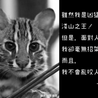 Photo of the Day: 'Letter' from Taiwan leopard cat