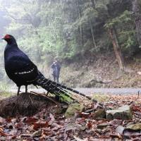 守護台灣山林之美 大雪山賞鳥大賽系列活動開始報名