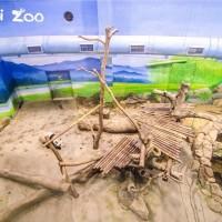 30年來首見! 台北市立動物園6/19起休園10天