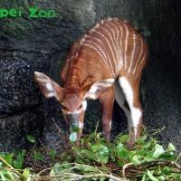 台北市立動物園ZooBaby Online 陪你渡過不一樣的兒童節