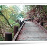 台灣第一條國家步道 林務局:重溫300年前《霞喀羅古道-楓火與綠金的故事》