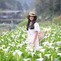 Taiwan Calla Lily Festival kicks off tomorrow