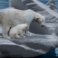 簡又新專欄 – 面對氣候變遷 觀看政府與民間企業的表現