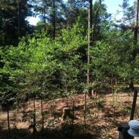 在地天然優勢 農林業混合經營林下經濟