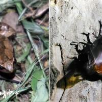 羅東「夜探林場」 搜尋夜間動物生存之道