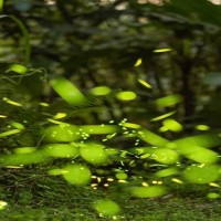Enjoy fireflies in Taipei's Tsuei Lake in Muzha Park