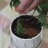環保意識再提升  民眾可在家把廚餘變堆肥