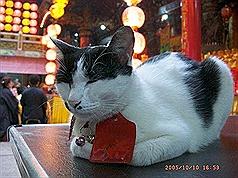 越南河内市政府:請民衆不要再吃貓狗肉