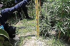 厄瓜多客運事故 車内地板下竟藏500公斤大麻!