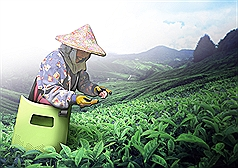 Taiwan to subsidize COVID-19 quarantine for migrant farmworkers