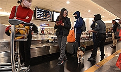 Dogs sniffing for banned pork at Taiwan Taoyuan International Airport on the first day of higher fines.