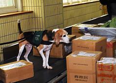 豬瘟疫情嚴峻 東南亞5國入境旅客全面查驗手提行李