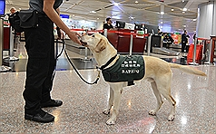 Visitor from Myanmar attacks pork-sniffing dog at Taiwan airport