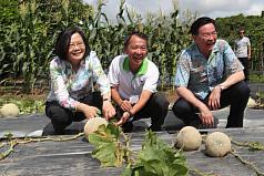 蔡英文出訪 帛琉總統:種下愛「文」芒果象徵兩國好交情